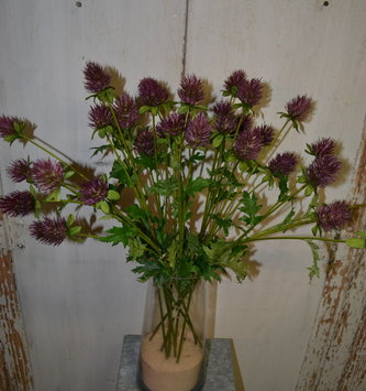 "24"" Purple Thistle Spray"