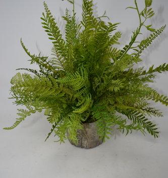 Custom Mixed Fern in Tree Pot