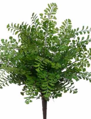 "16"" Maidenhair Fern Bush"