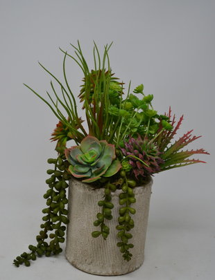 Custom Succulent Obsession