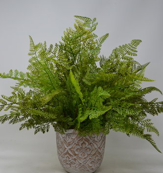 Custom Lace Fern in Patterned Pot