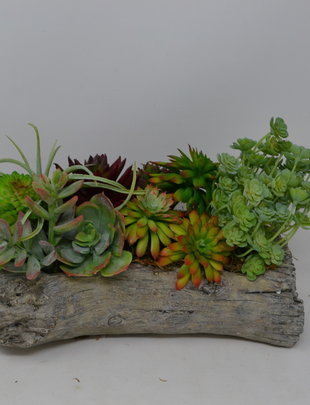 Custom Succulents in Log Container