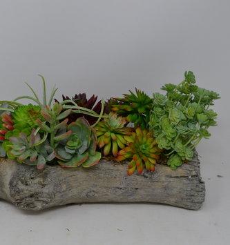 Custom Succulents in Log Container