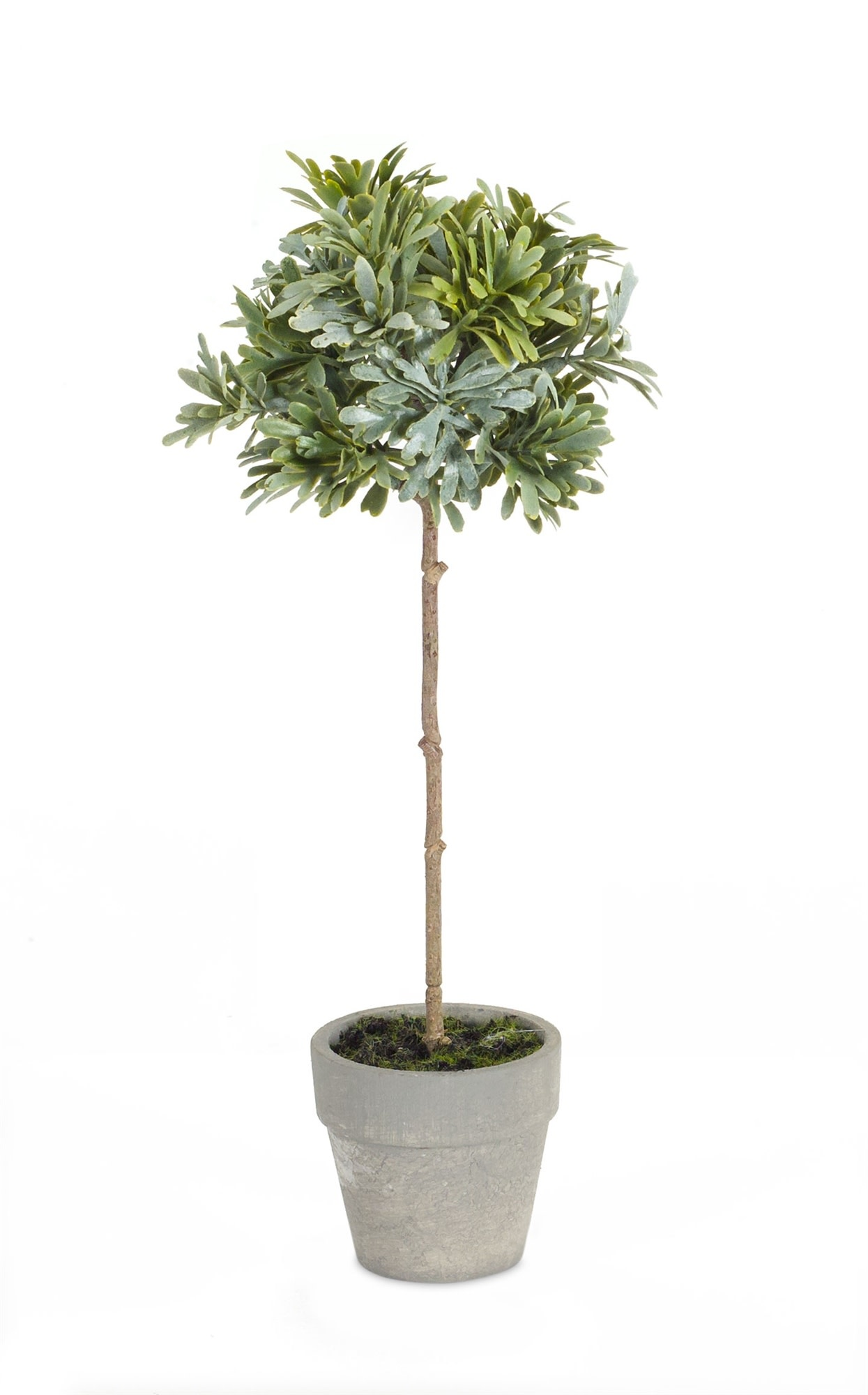 """12"""" Potted Herb Topiary"""