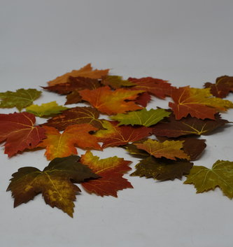 Bag of 20 Fall Maple Leaves
