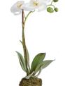 """15"""" Phalaenopsis Drop In"""