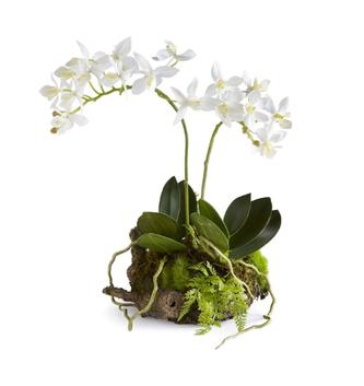 """11.5"""" Mini Dendrobium Drop In"""