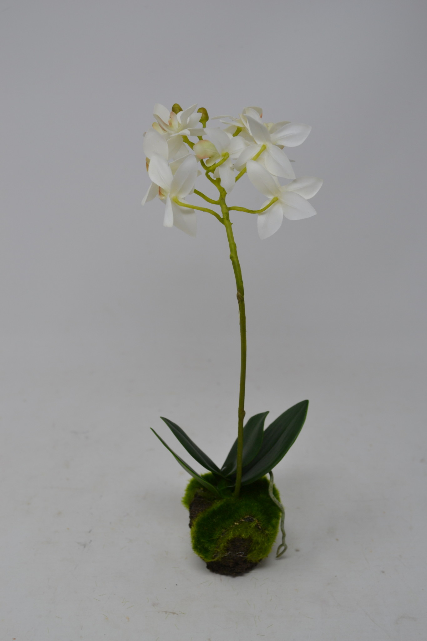 """12"""" Dendrobium Drop In"""