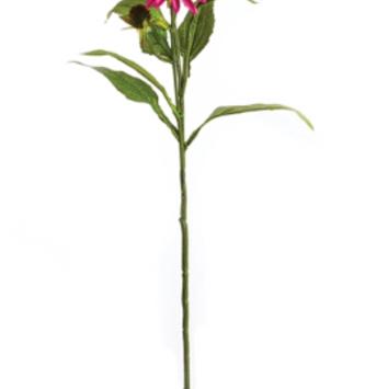 Fuchsia Coneflower Spray