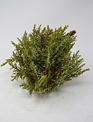 Snowed Pine Drop-In Orb