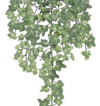 Crawling Mini Ivy Bush
