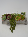 Custom Mini Succulent Log Arrangement