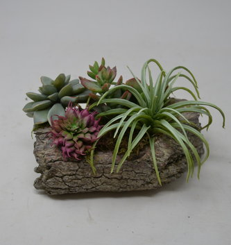 Custom Small Sage Succulent in Log Container
