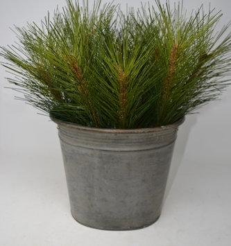 "12"" Sugar Pine Pick"