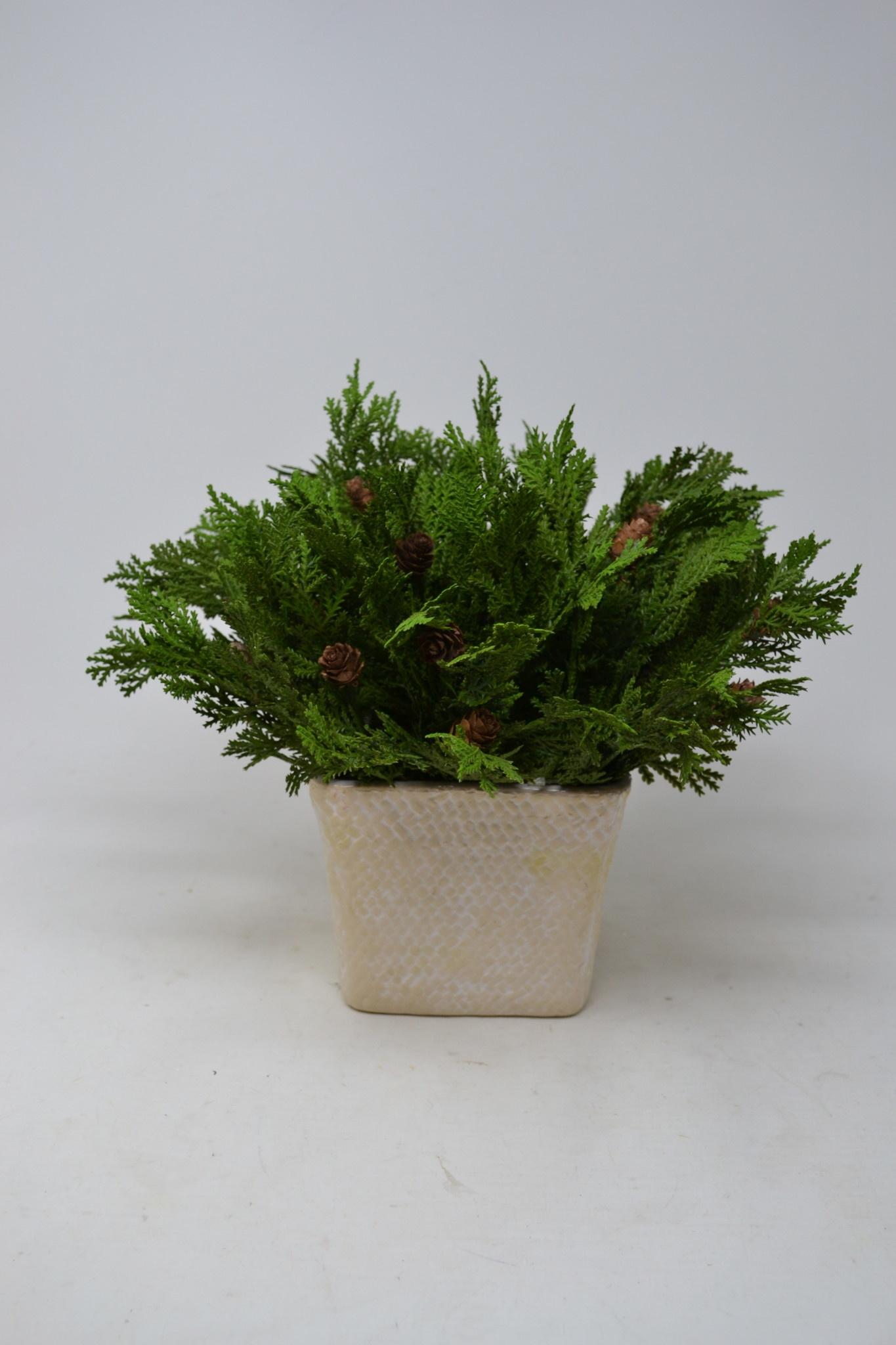 """11"""" Mini Cedar Pick"""