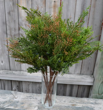 Mixed Cedar Juniper Spray