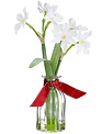 """12.5"""" Holiday Paperwhite in Vase"""
