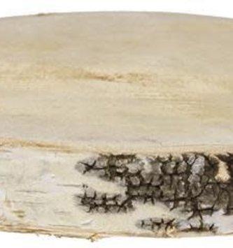 Large Birch Slice
