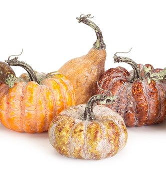 Bag of 6 Mixed Gourds & Pumpkins