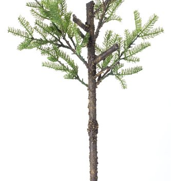 Large Pine Sapling Branch