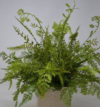 Custom Mixed Fern In Small Rectangular Vase