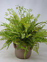 Custom Mixed Fern Taupe Container Arrangement