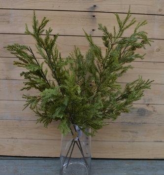 Lycopodium Pine Spray