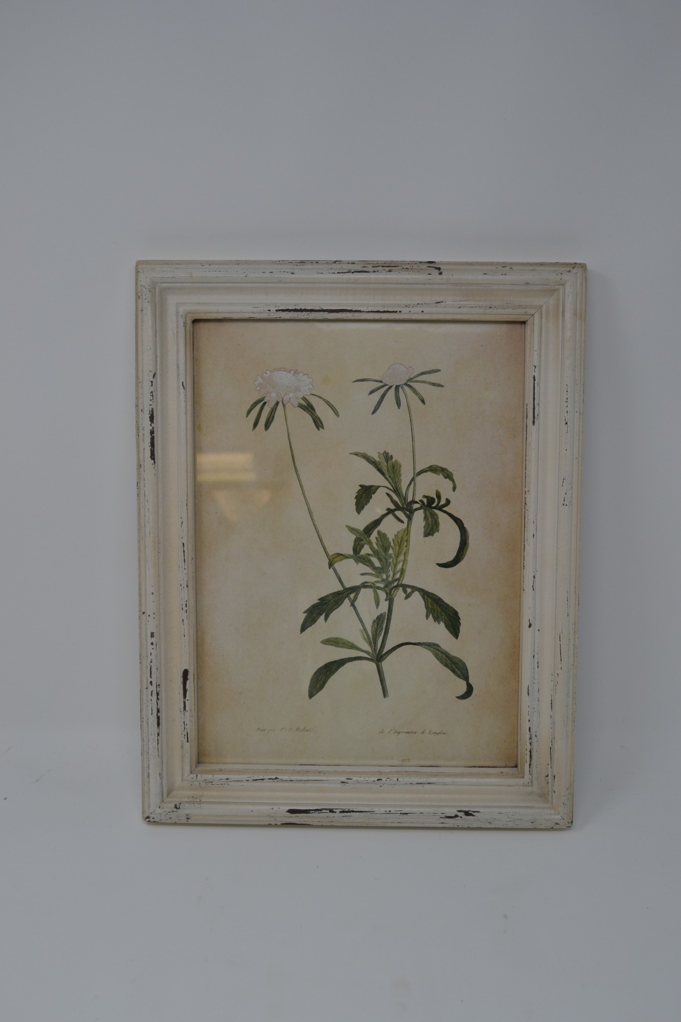 Wildflower Botanical Print