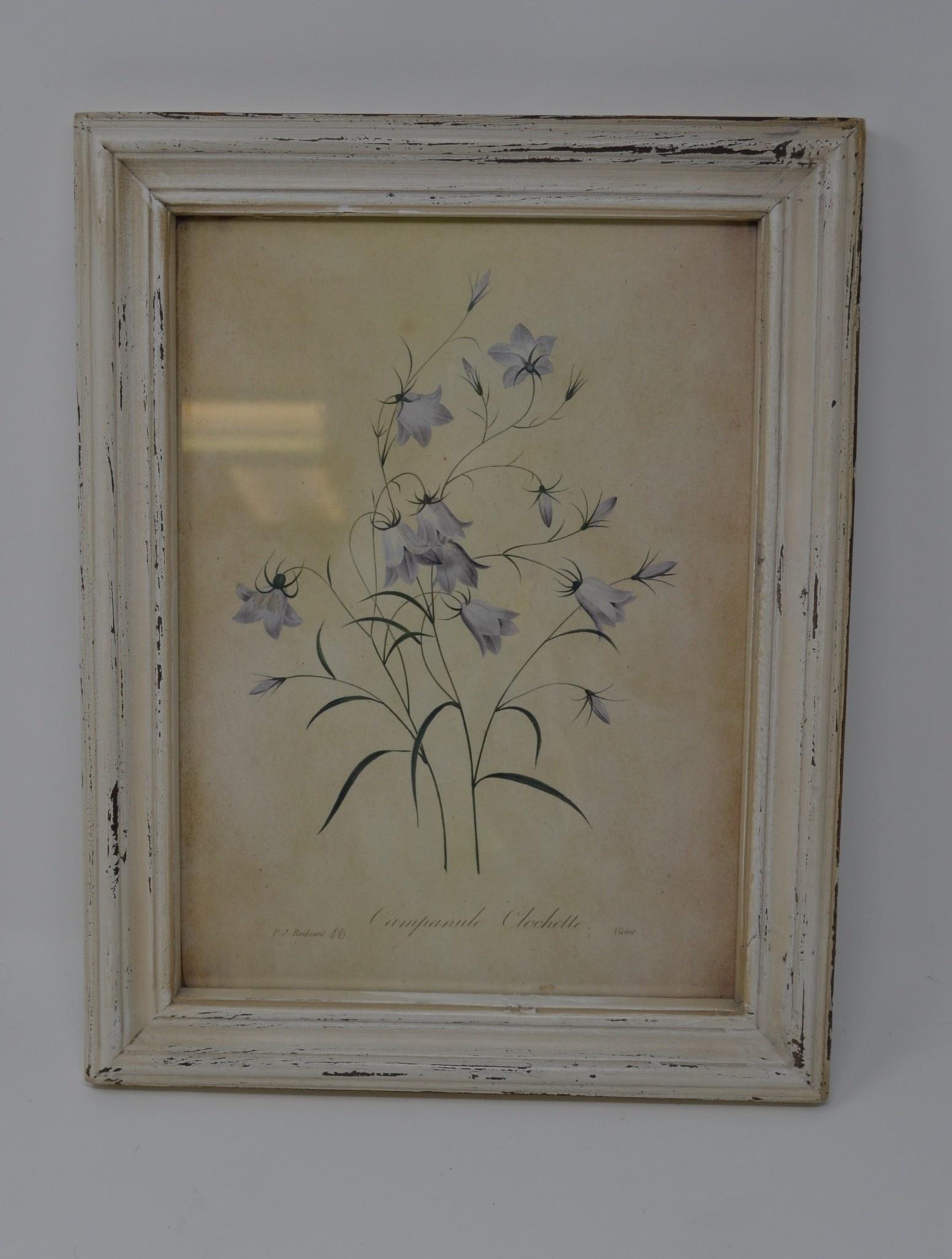 Wildflower Botanical Print