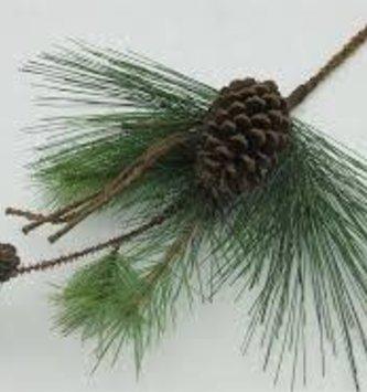 """19"""" Green Bristle Pinecone Pick"""