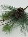 "19"" Green Bristle Pinecone Pick"
