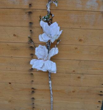 Snowy Japanese Magnolia Branch