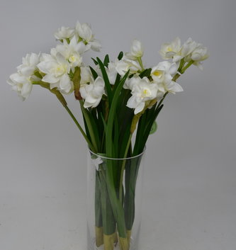 Fresh Narcissus Spray