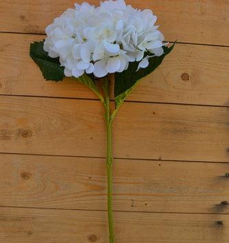 White Round Hydrangea Stem