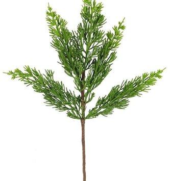 Arborvitae Pine Pick