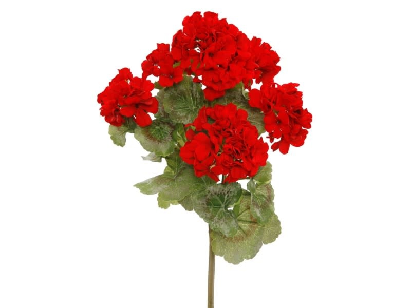 Red Garden Geranium Bush