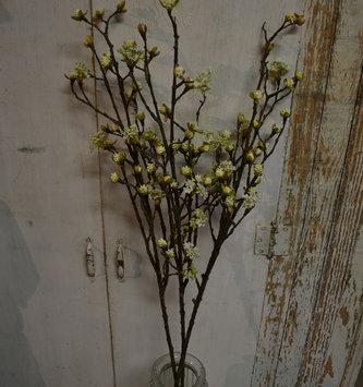 Budding Blossom Branch