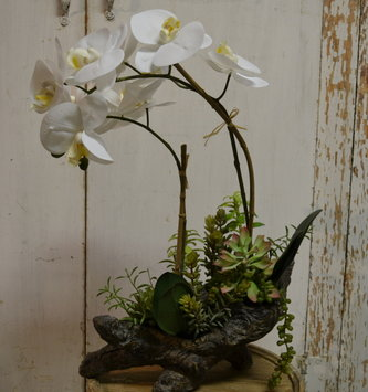 Phalaenopsis Orchid In Tiered Log Container