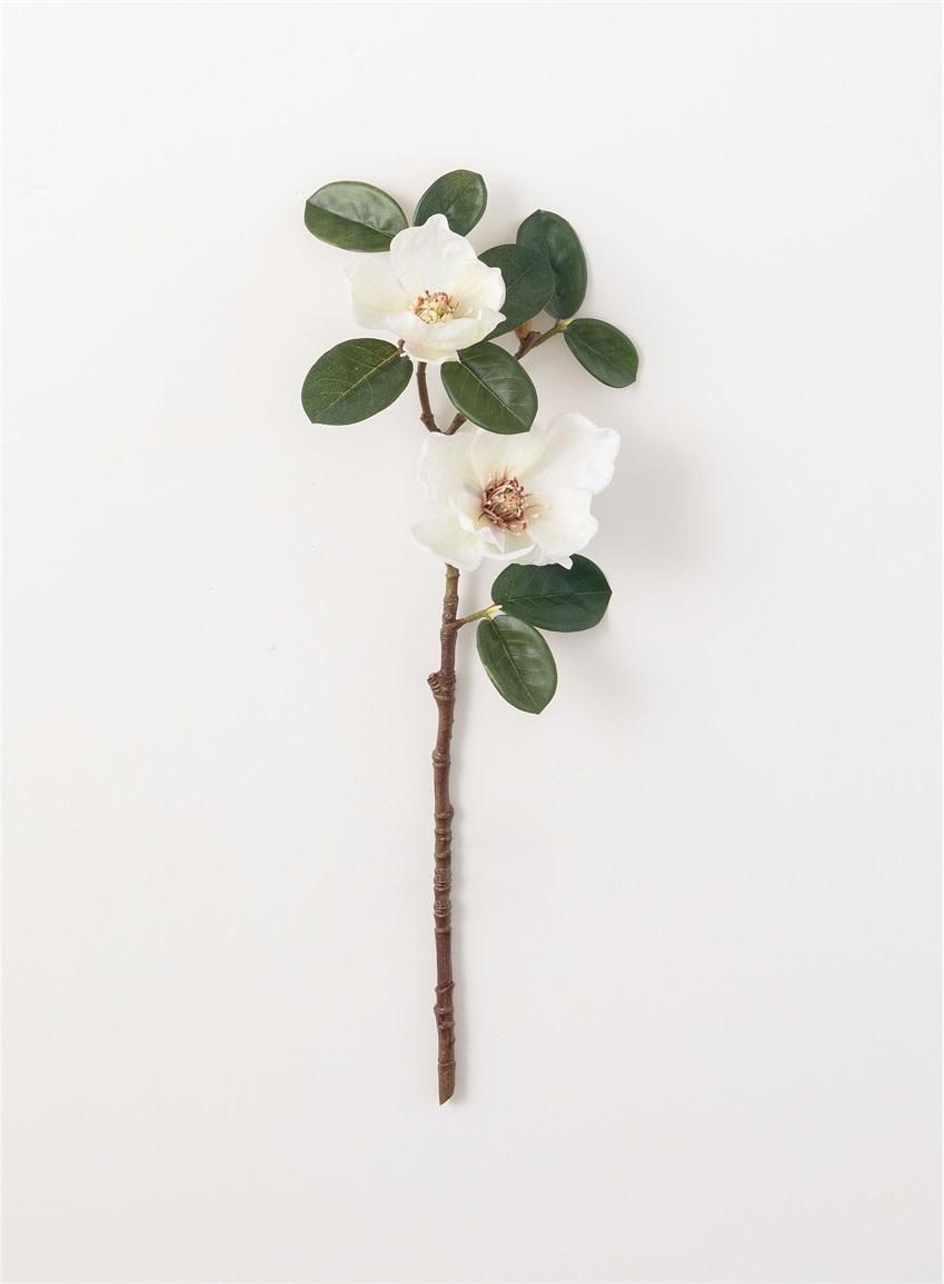 Magnolia Branch Stem