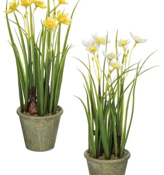 "12"" Potted Narcissus (2-Colors)"
