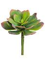 "6"" Red-Tipped Sage Echeveria Pick"