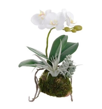 "11"" White Orchid & Succulents on Moss"