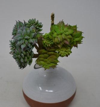 """10.5"""" Succulent Branch Pick (2 Colors)"""