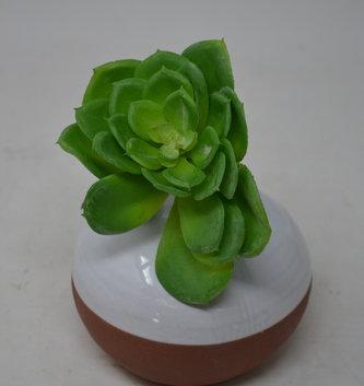Jade Green Echeveria Pick