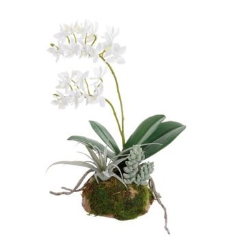 """11"""" White Dendrobium & Succulents on Moss"""