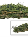 """18"""" Moss Bark Container"""