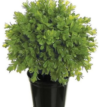 Potted  Boxwood Plant (2-Sizes)