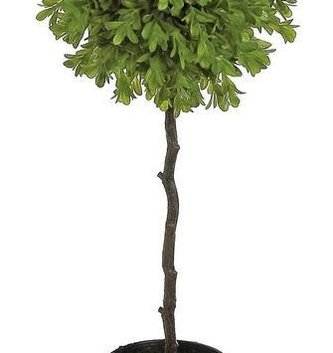 Boxwood Potted Topiary (3-Sizes)
