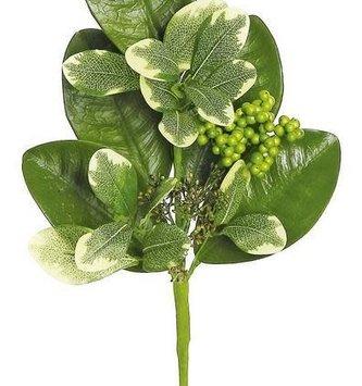 Magnolia Berry Pittosporum Pick
