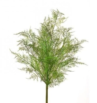 "20"" Asparagus Fern Spray"